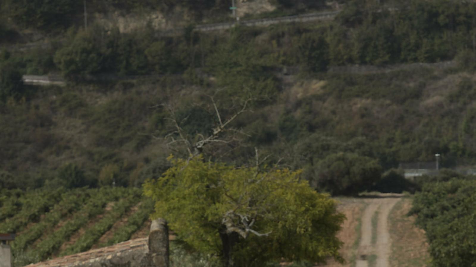 Alaitz Leceaga a les vinyes de la Bodega Contino.