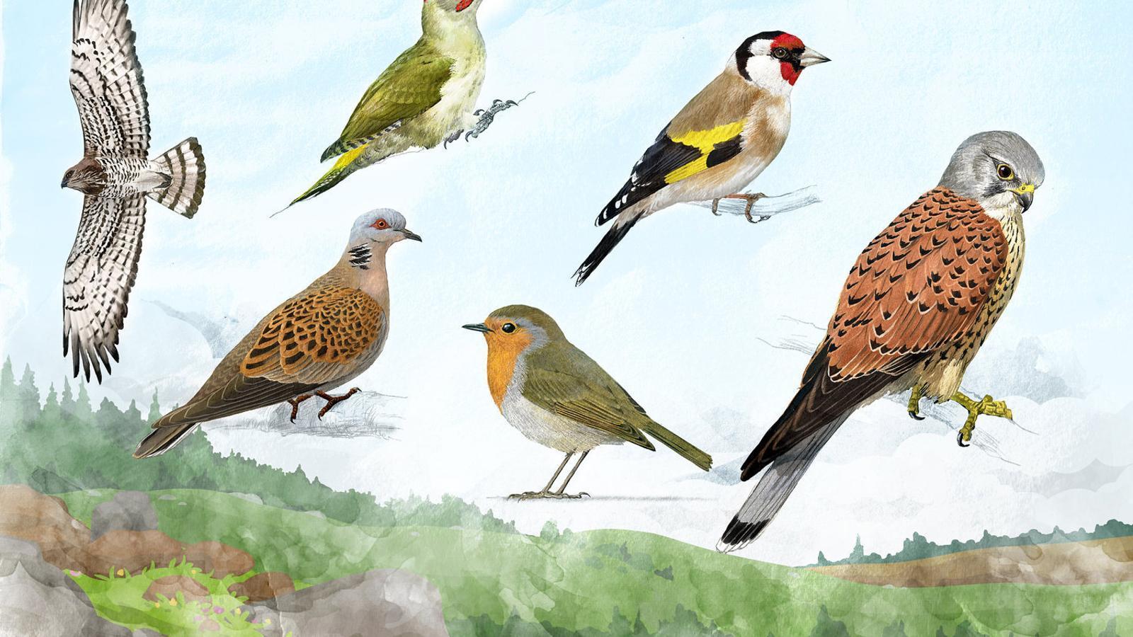 Passió pels ocells
