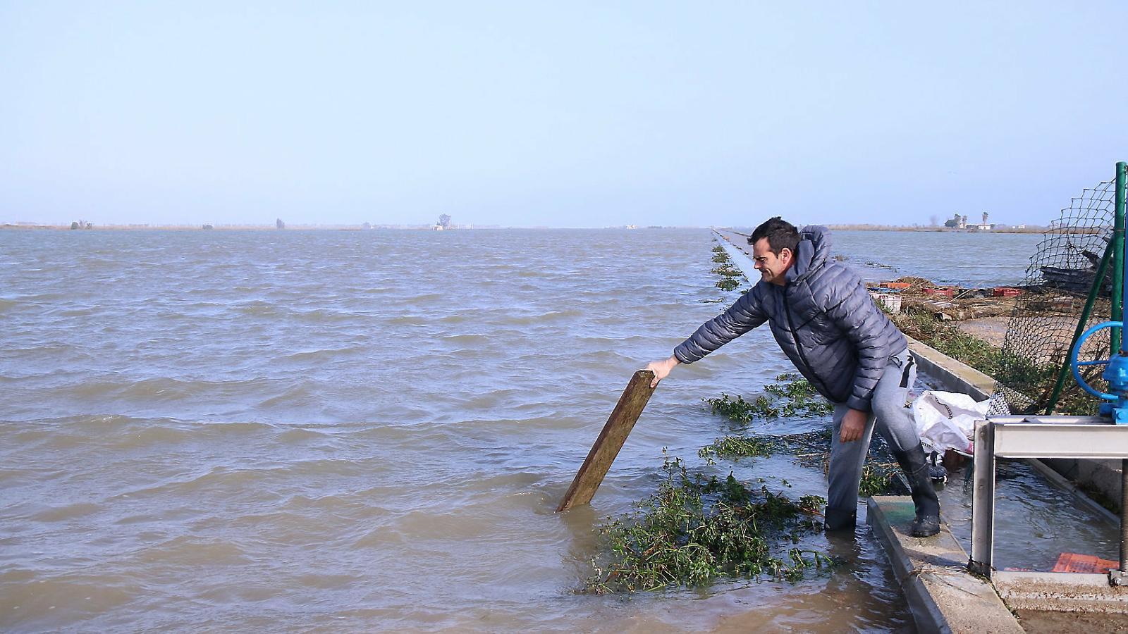 Un arrossaire comprovant l'aigua del mar al delta de l'Ebre.