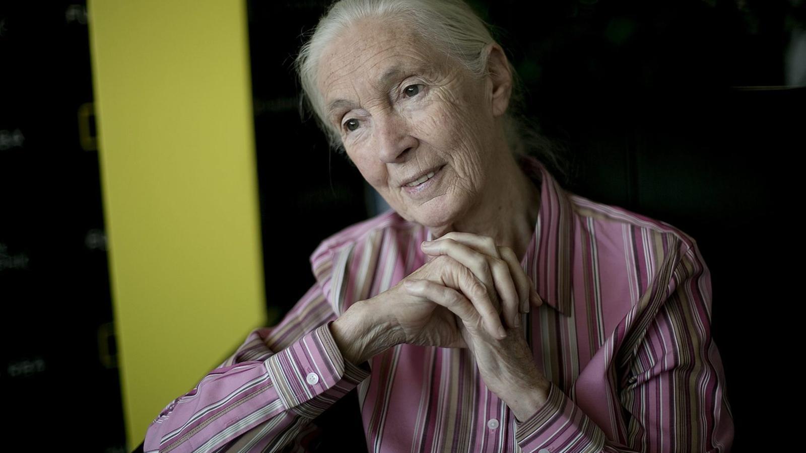 """Jane Goodall: """"Queda una petita finestra  de temps per salvar el planeta"""""""