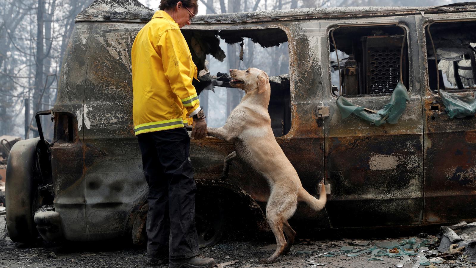 Una dona busca restes humanes entre la cendra amb l'ajuda del seu gos, a Paradise