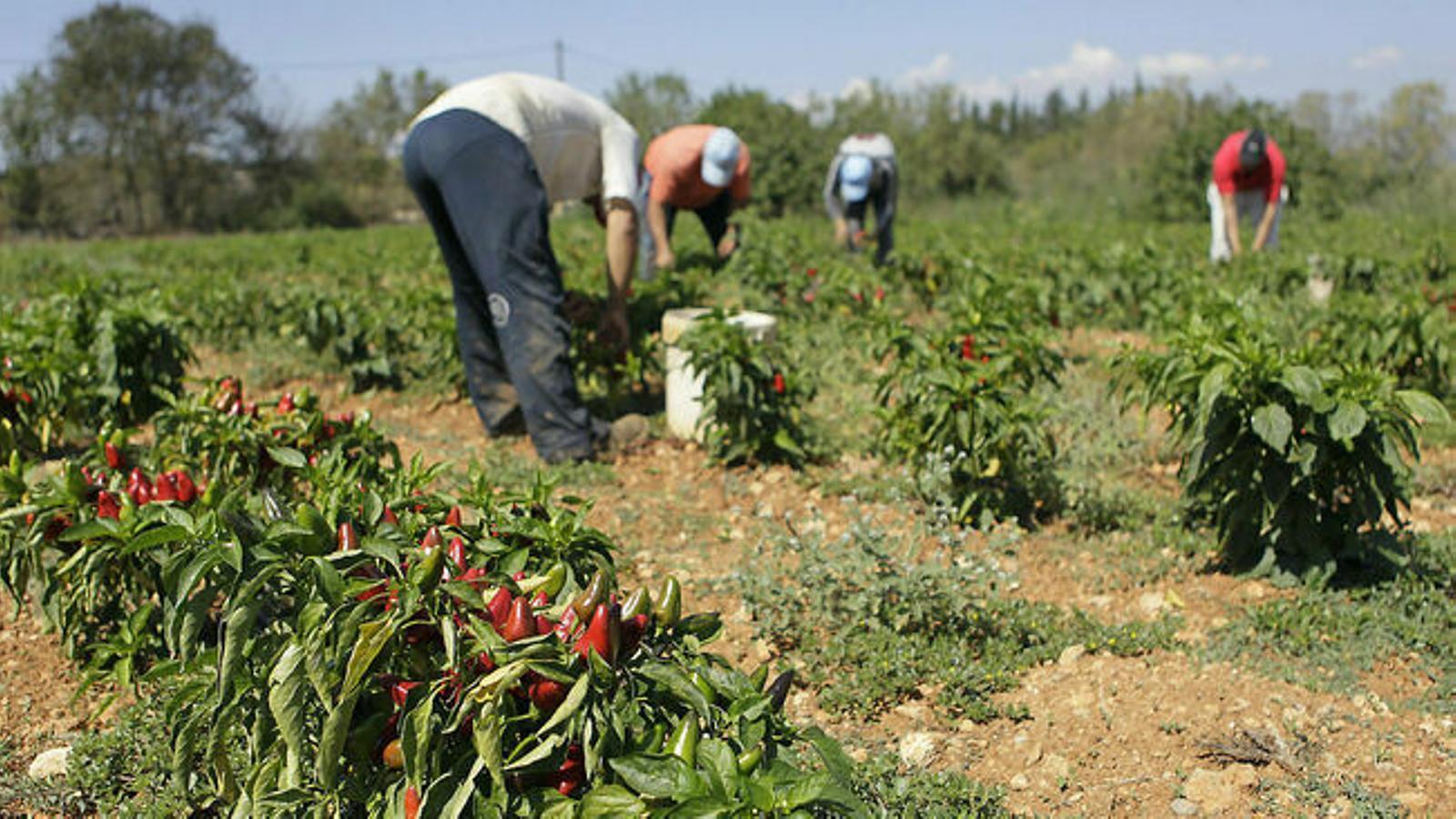 Imatge dels pagesos de les Illes Balears. / ISAAC BUJ