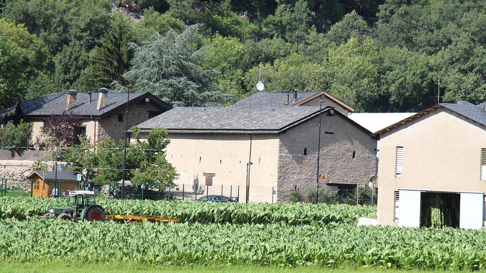 Un camp de tabac a Santa Coloma, aquest dimarts. / T. N. (ANA)