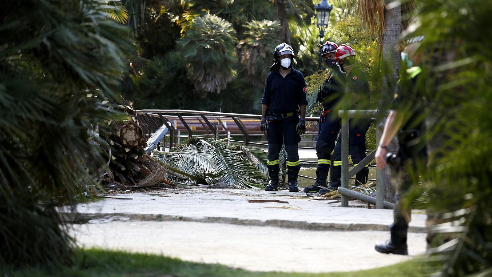 Els bombers, davant la palmera que ha matat un home aquest dimarts al Parc de la Ciutadella.