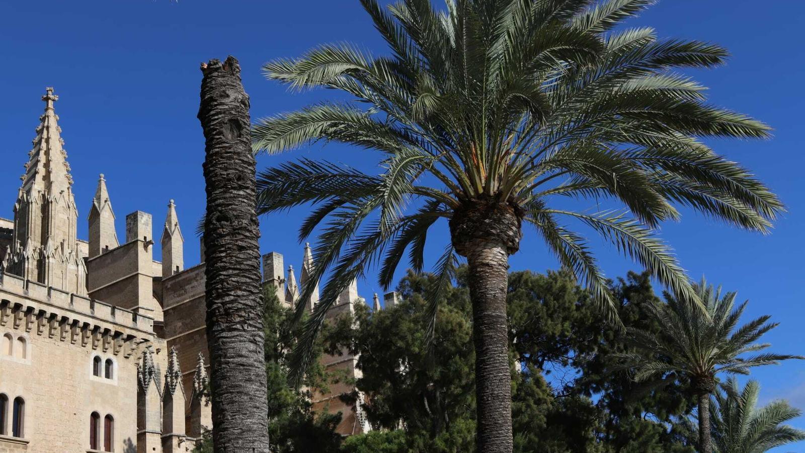 El vent fa caure una palmera i mata una dona al parc de la Mar de Palma
