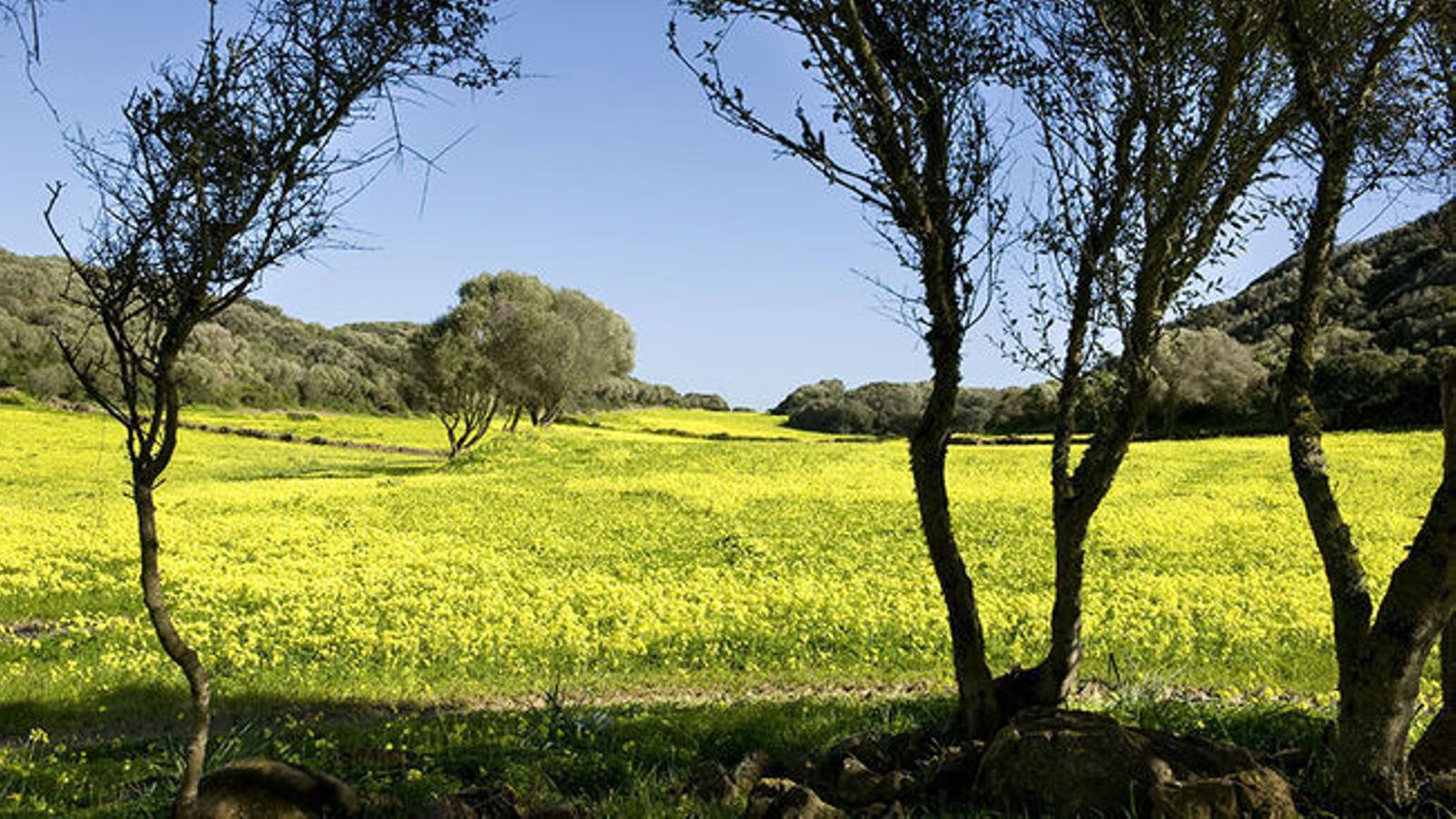 El sol serà el protagonista d'aquest dimecres a les Illes Balears.