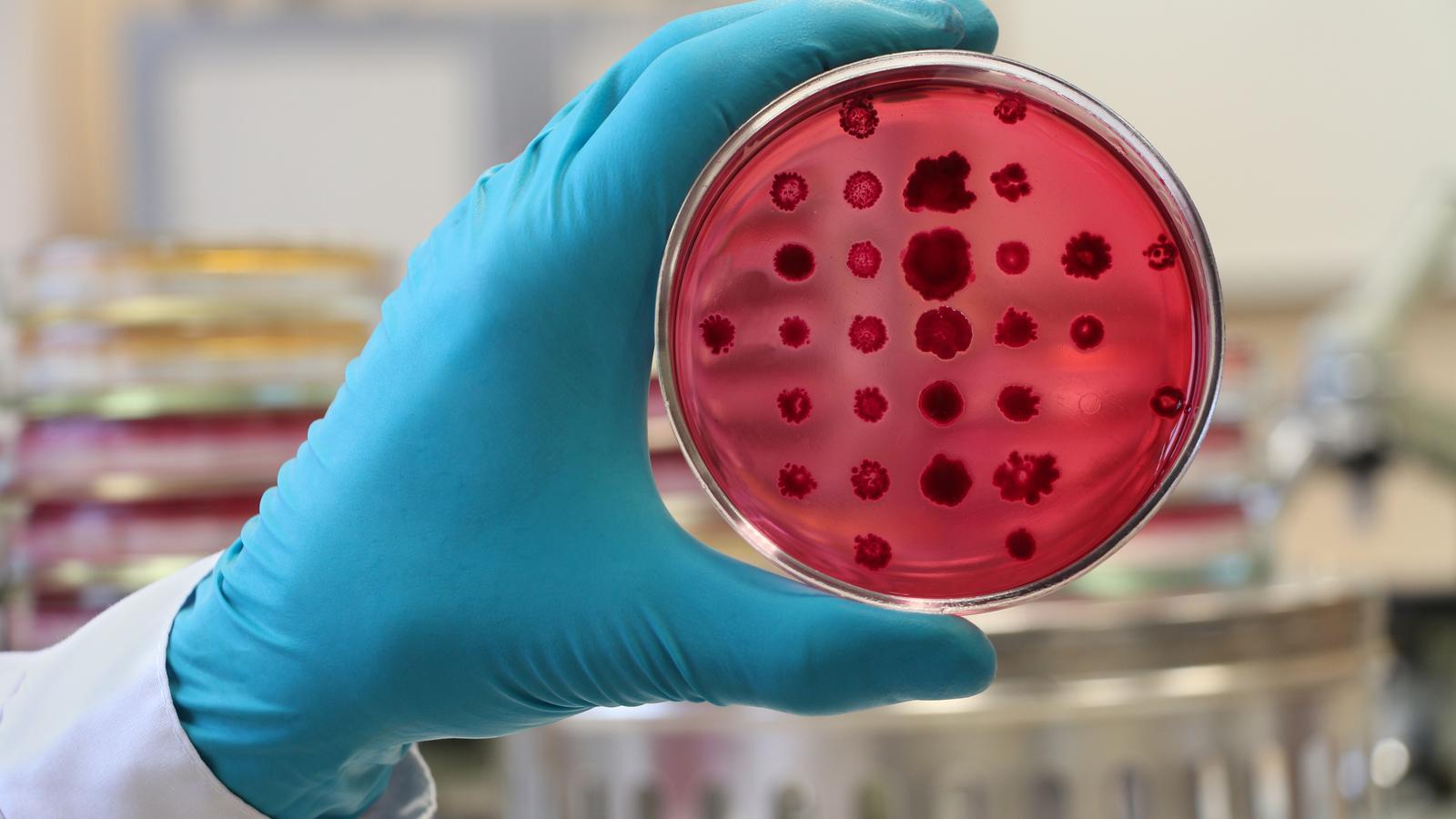 Los microbios nos avisan de las enfermedades que sufriremos