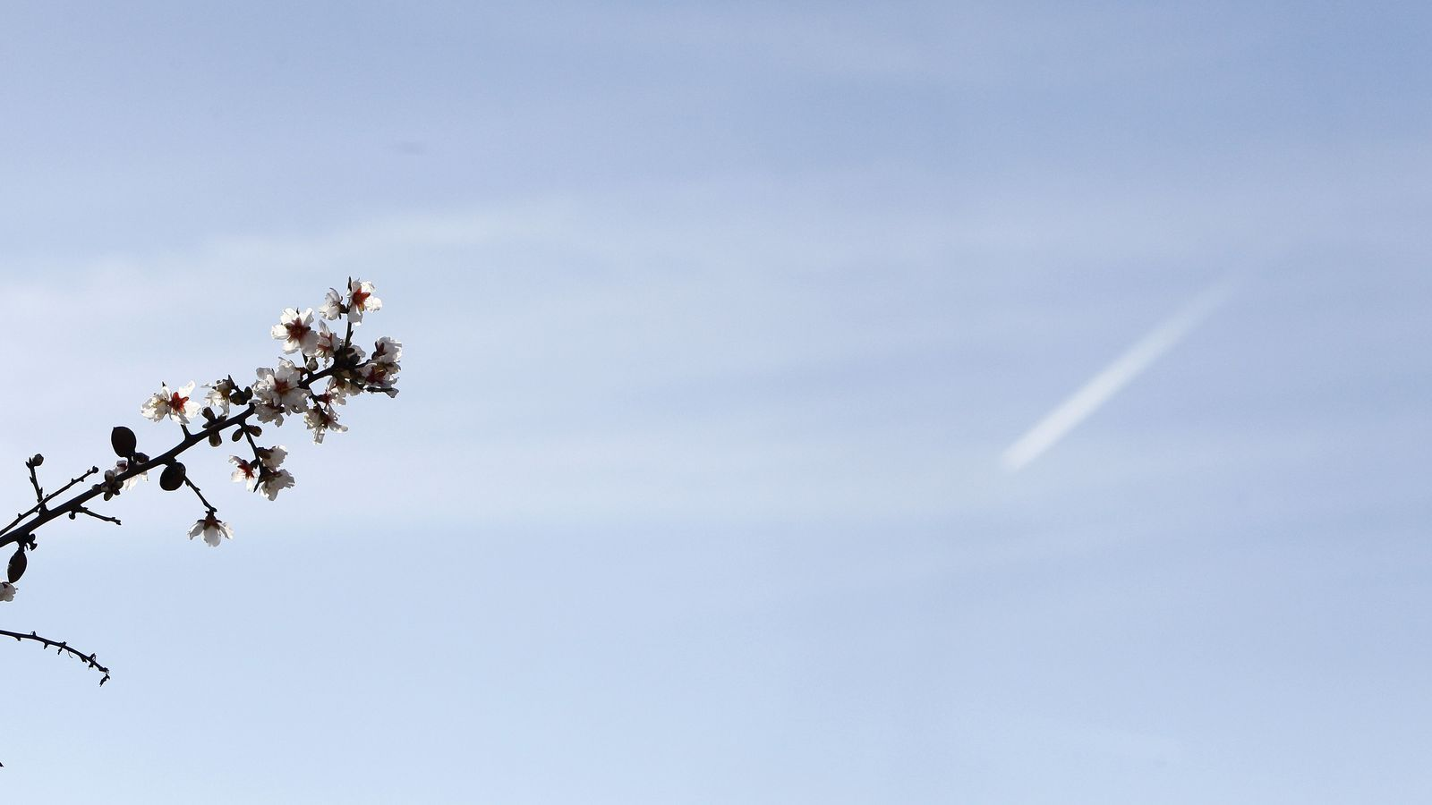 La flor d'ametller. /ISAAC BUJ
