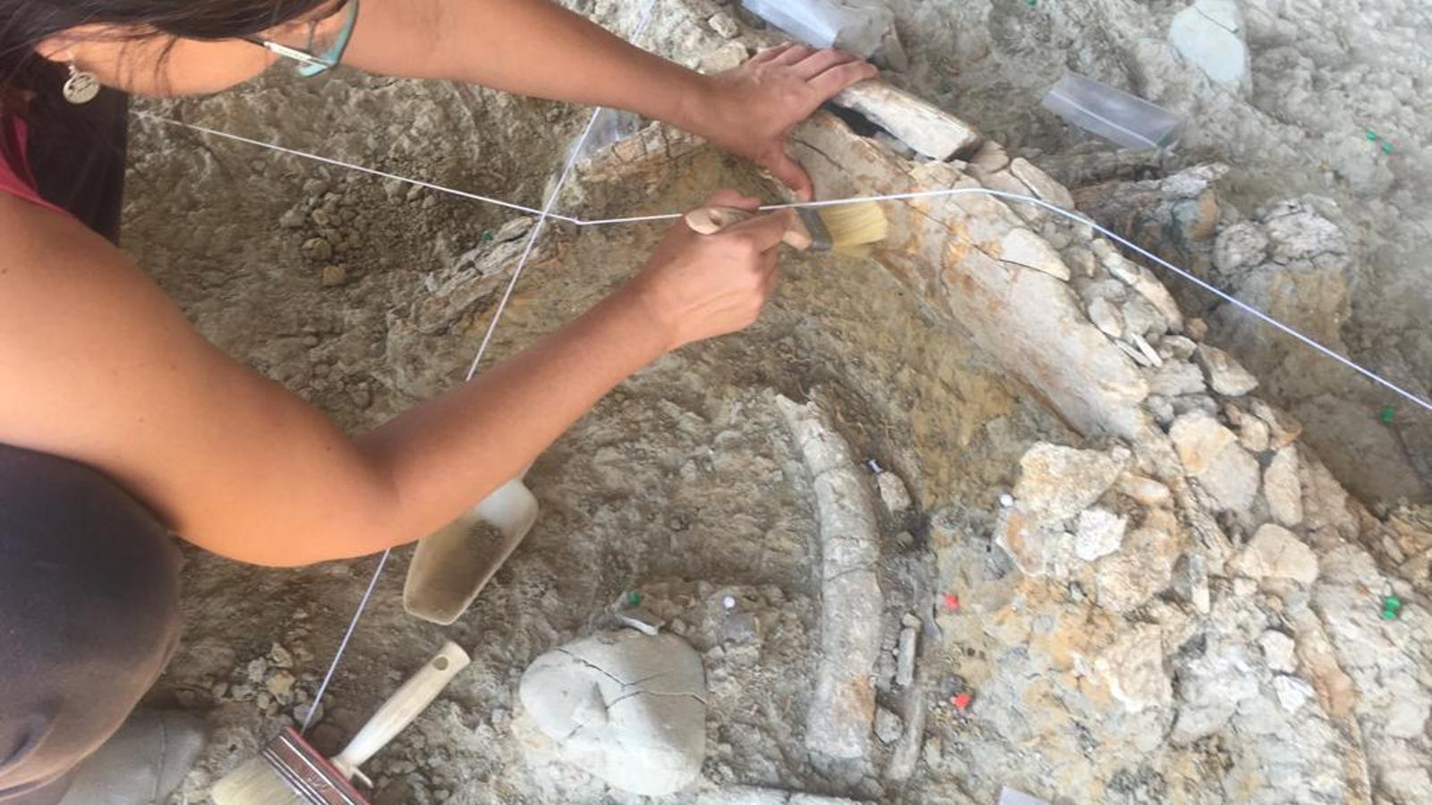Detall de l'excavació d'un os de mamut al Barranc de la Boella, a La Canonja
