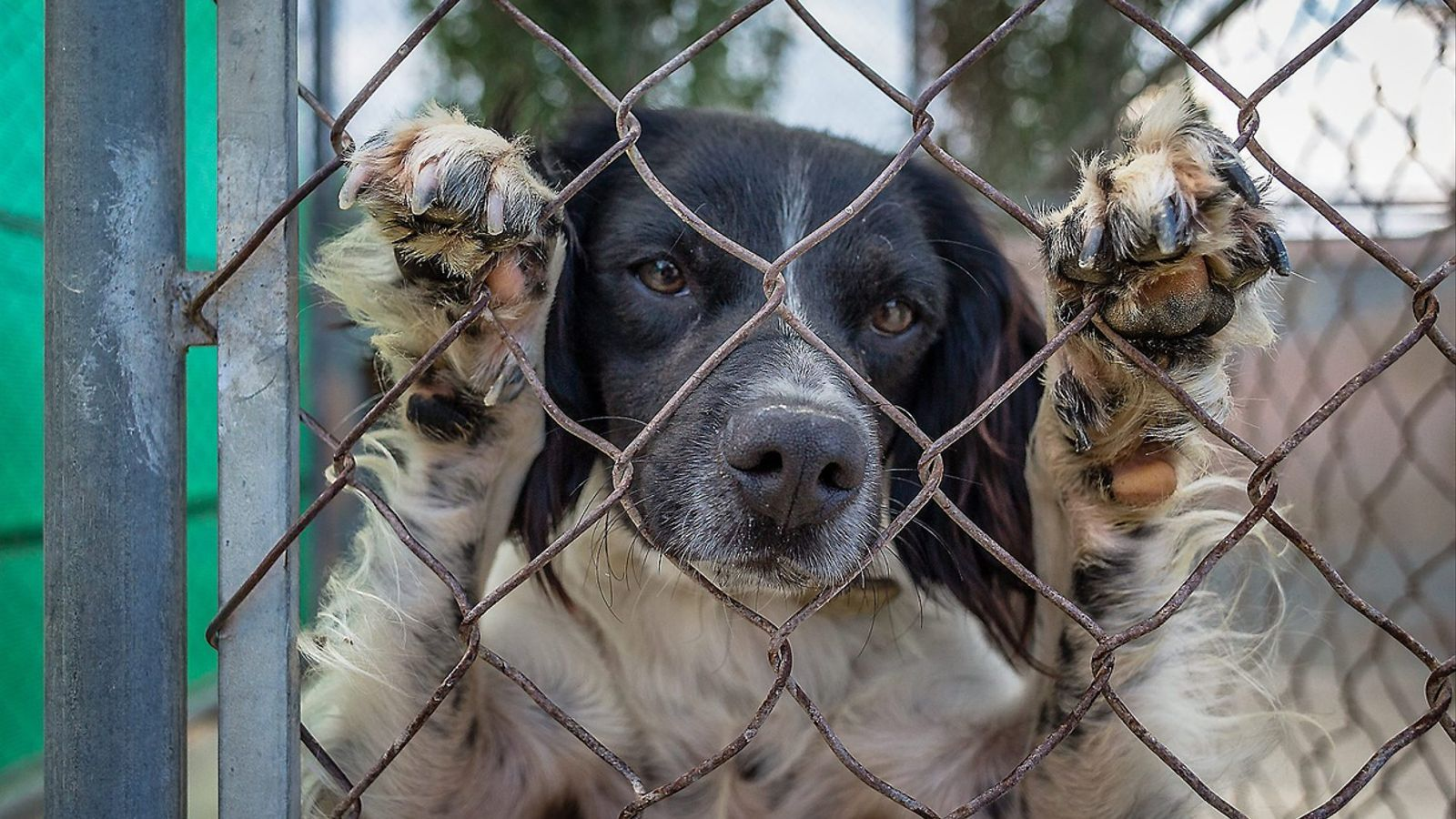 A la gossera de la protectora del Pla de l'Estany hi ha molts animals abandonats  i els que  menys s'adopten són els grans.