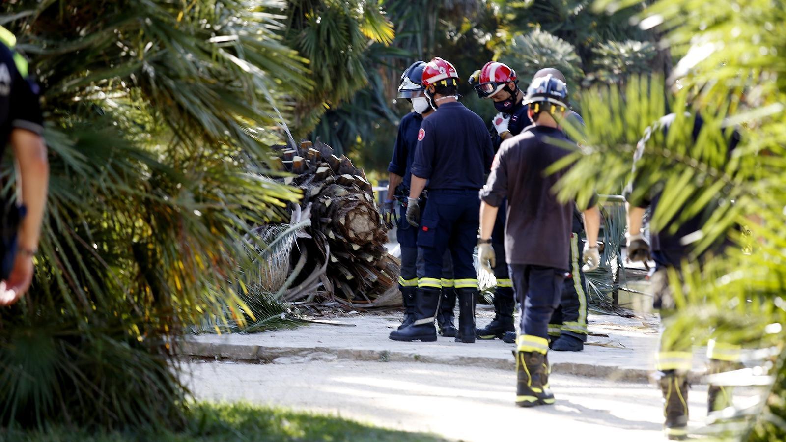 La palmera s'ha trencat pel terç superior del tronc de l'arbre, per causes que encara s'estan investigant