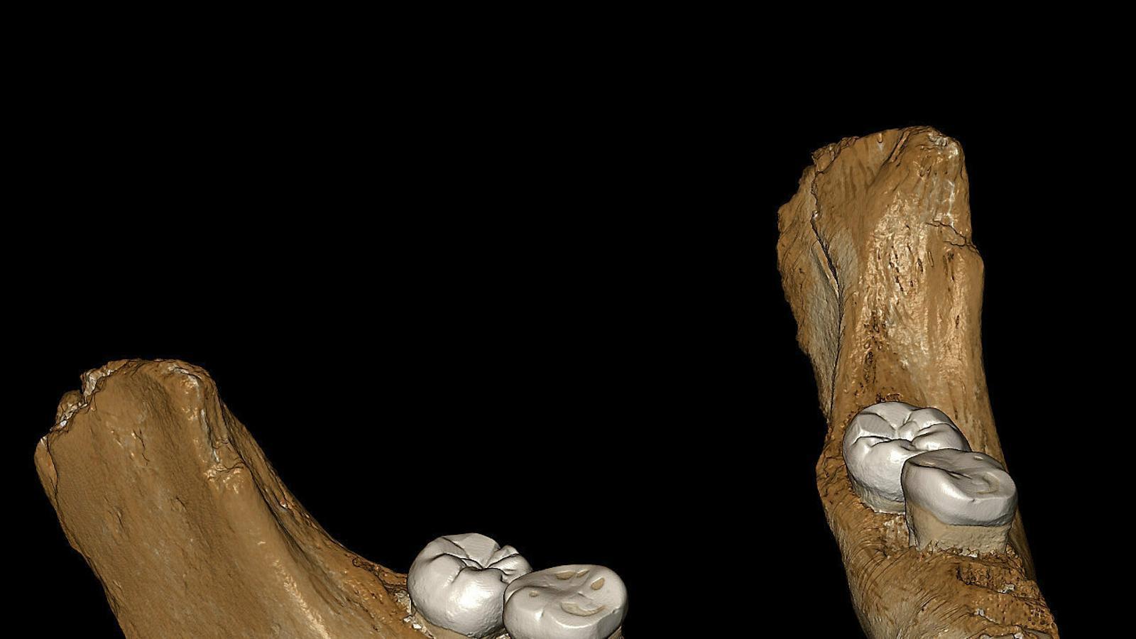 Troben restes de denissovans, parent del neandertal, al Tibet