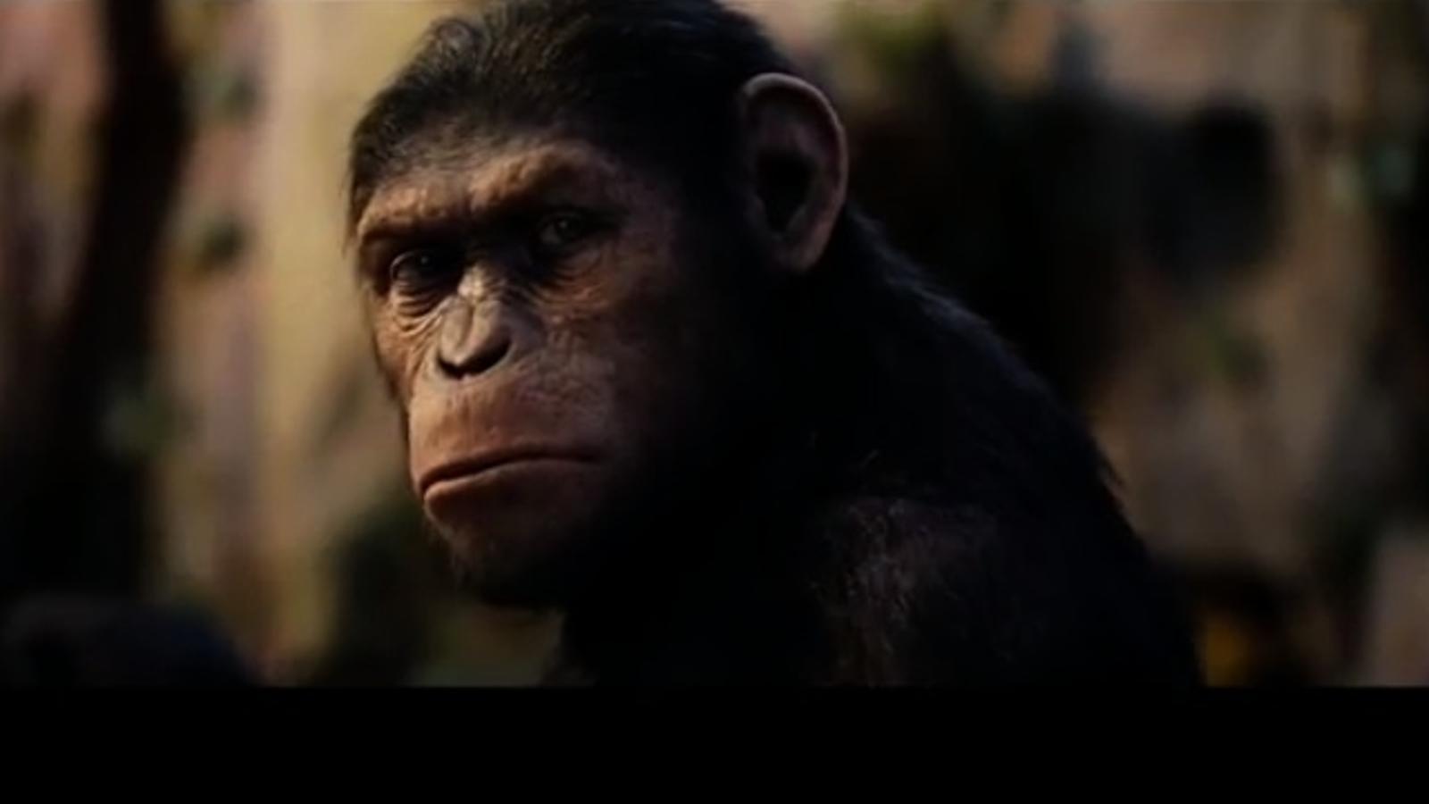 El nou tràiler del film 'El origen del planeta de los simios'