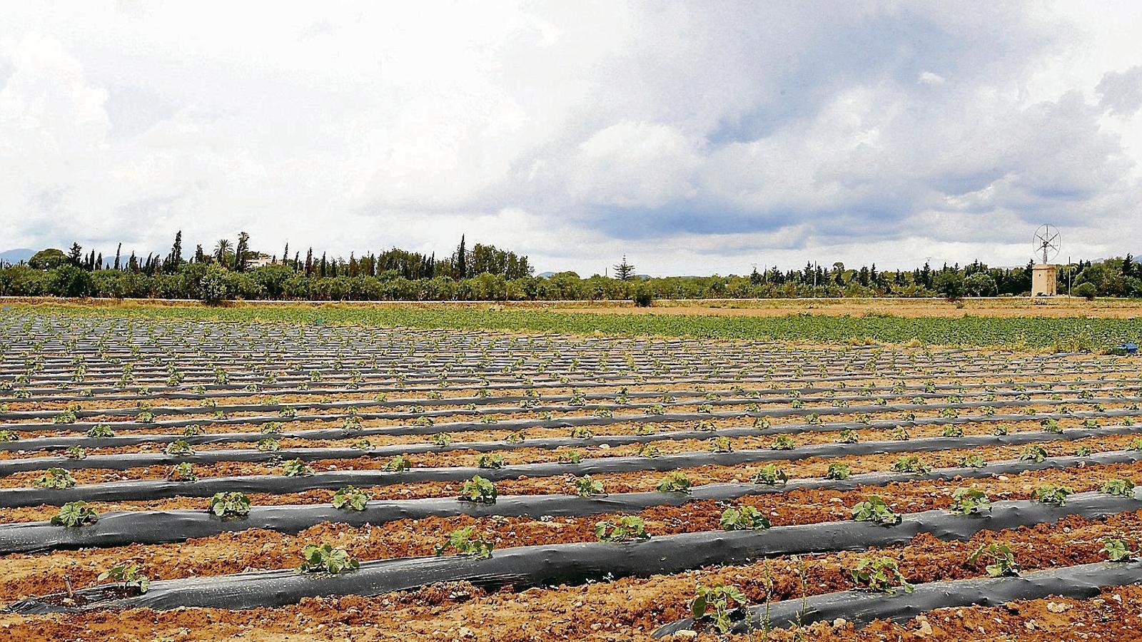 Els productors de les      Balears cerquen sobreviure  Amb la venda en línia