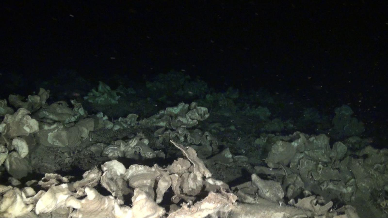 Les esponges pedra trobades per Oceana en zona de prospeccions petrolíferes