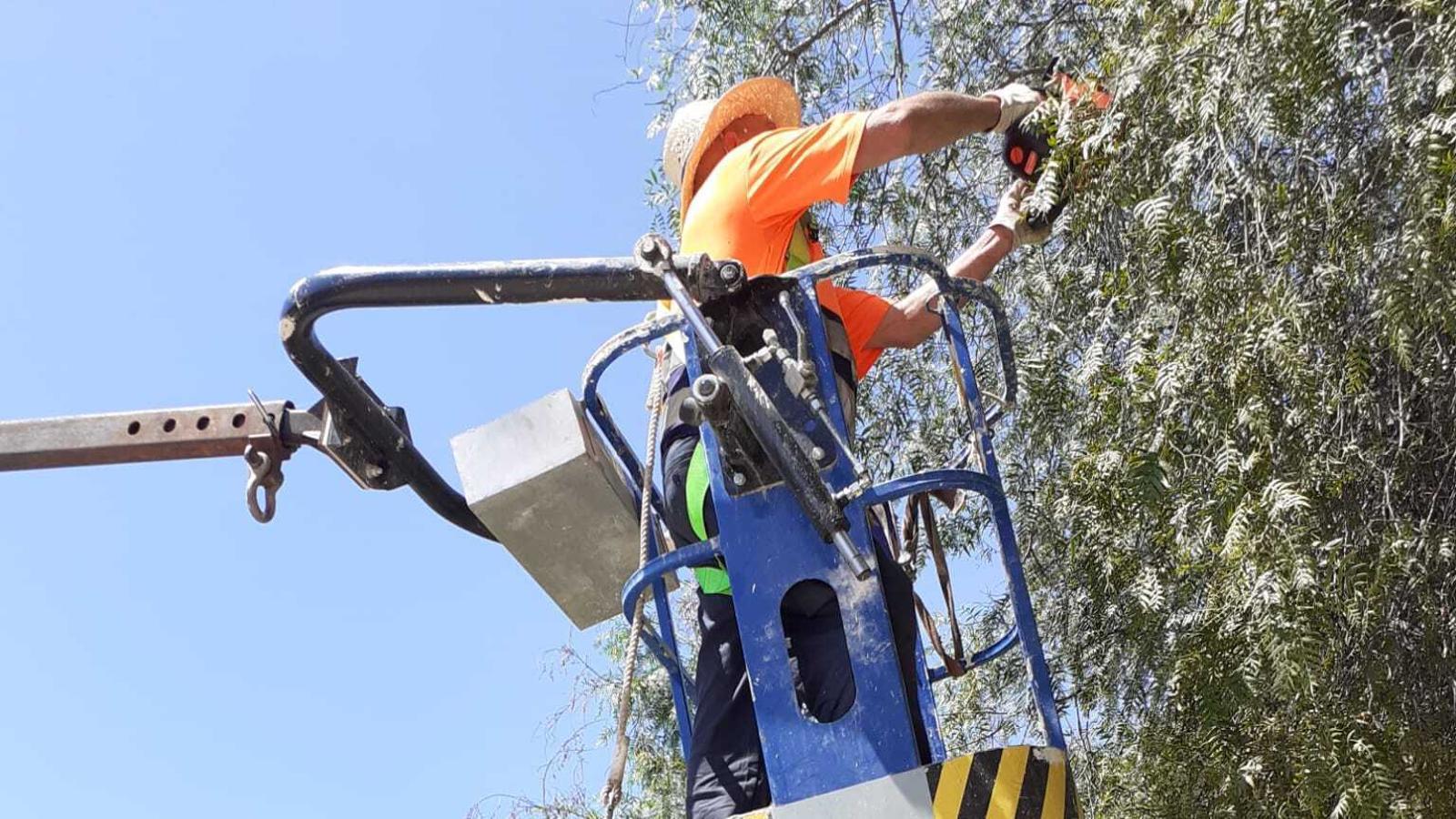 Un operari retalla el brancam d'un arbre, vora l'ambulatori de Portocolom.