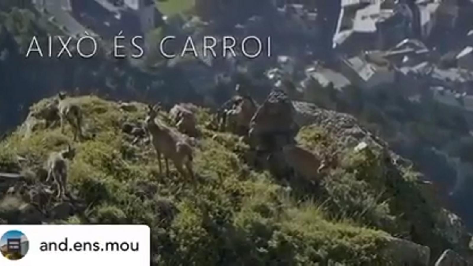 Vídeo d'Apapma de la fauna al pic de Carroi