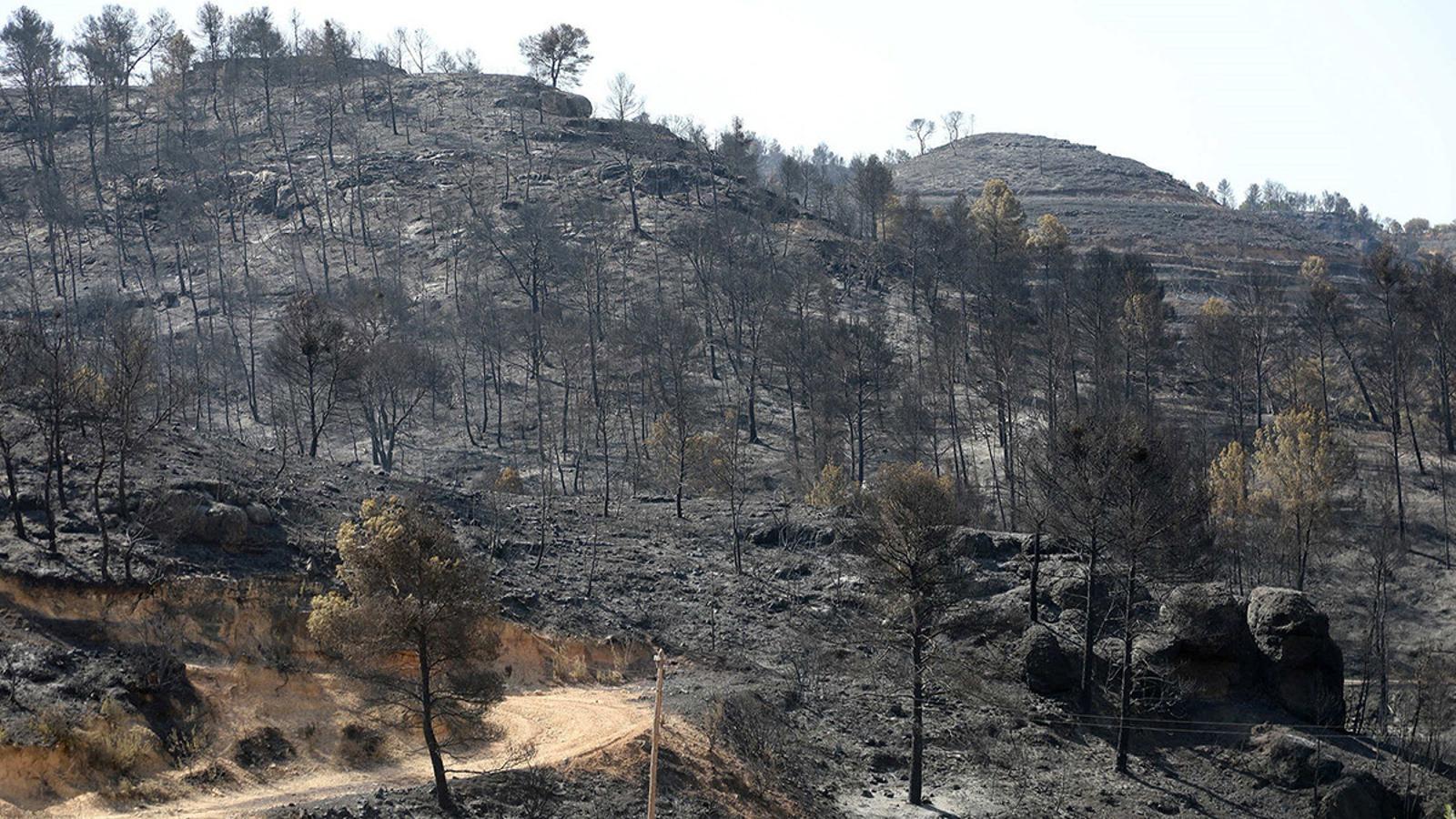 L'incendi forestal de la Ribera d'Ebre, en directe