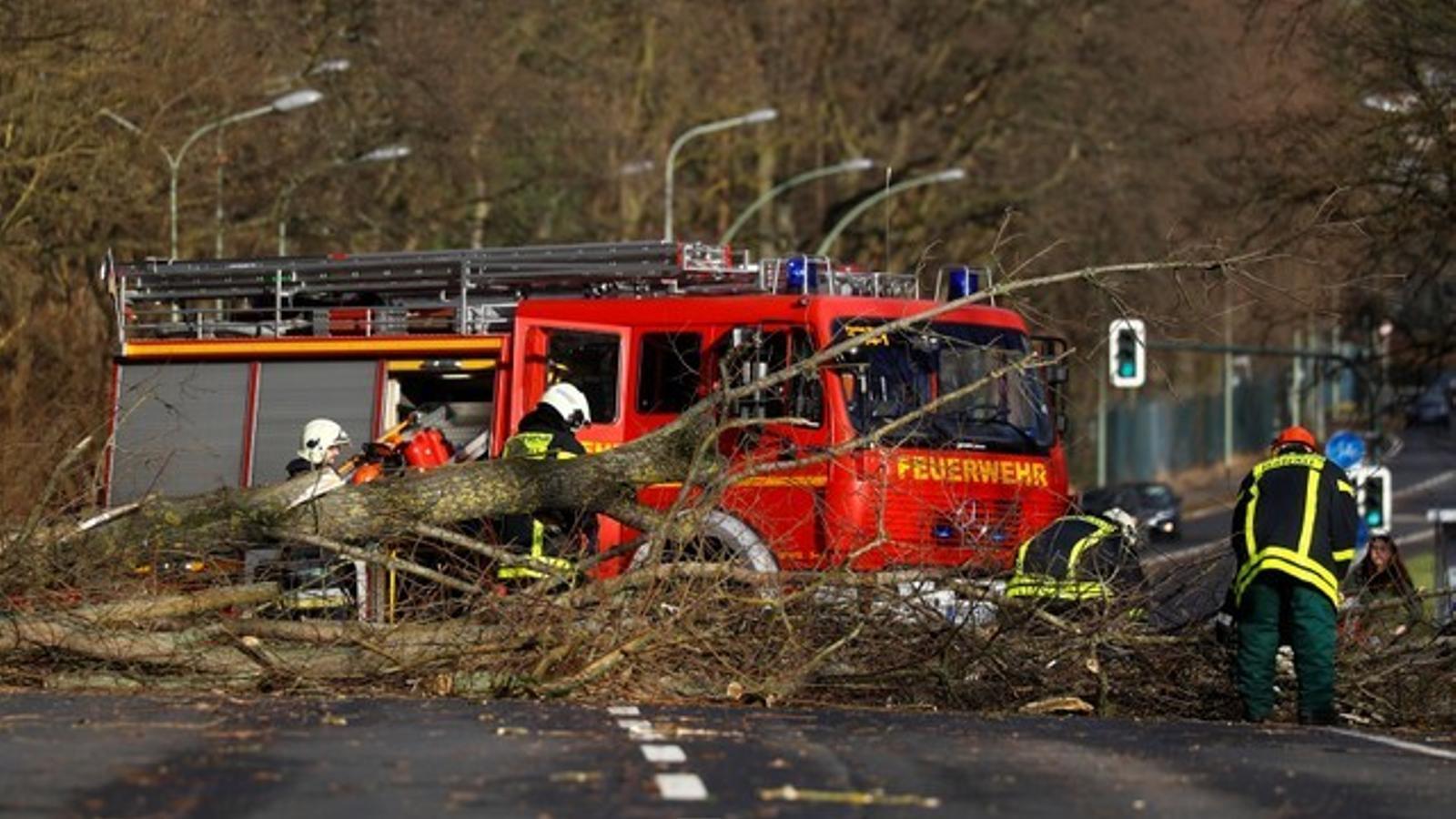 Bombers alemanys treballen per treure un arbre de la carretera / REUTERS