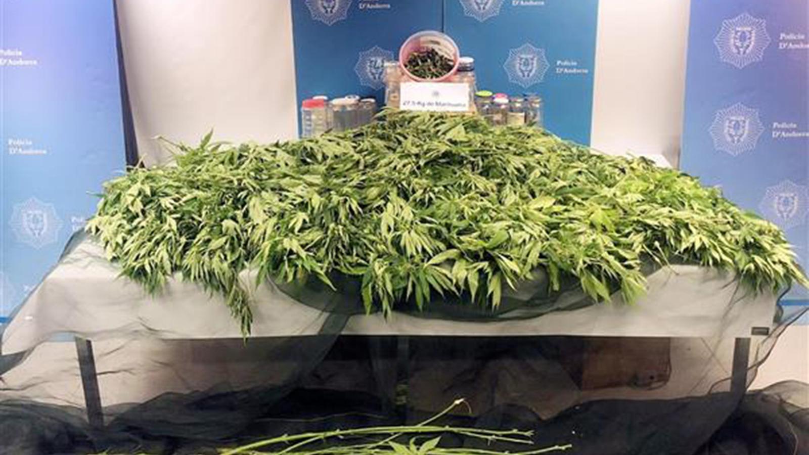 Les plantes decomissades. / COS DE POLICIA