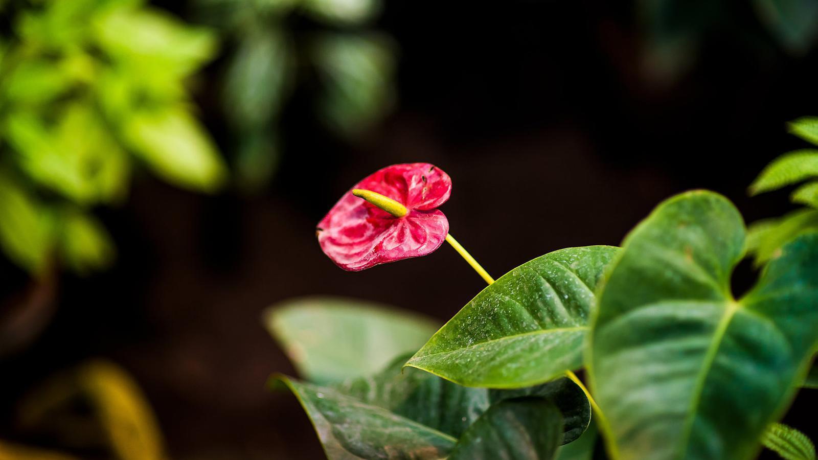Plantes d'interior per a negats