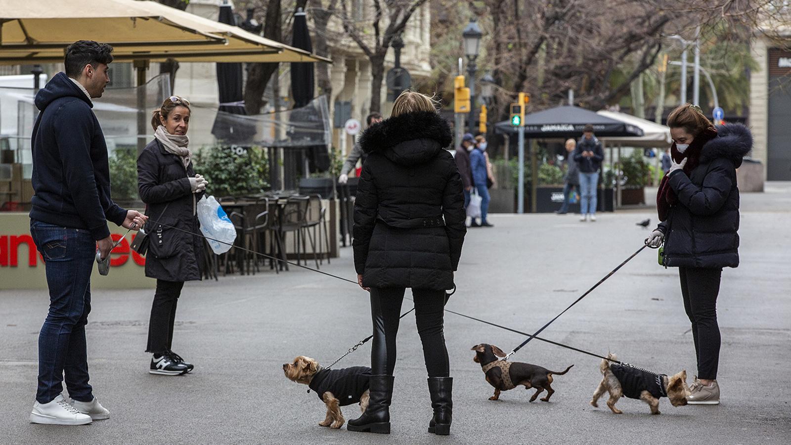 Diverses persones passejant el gos
