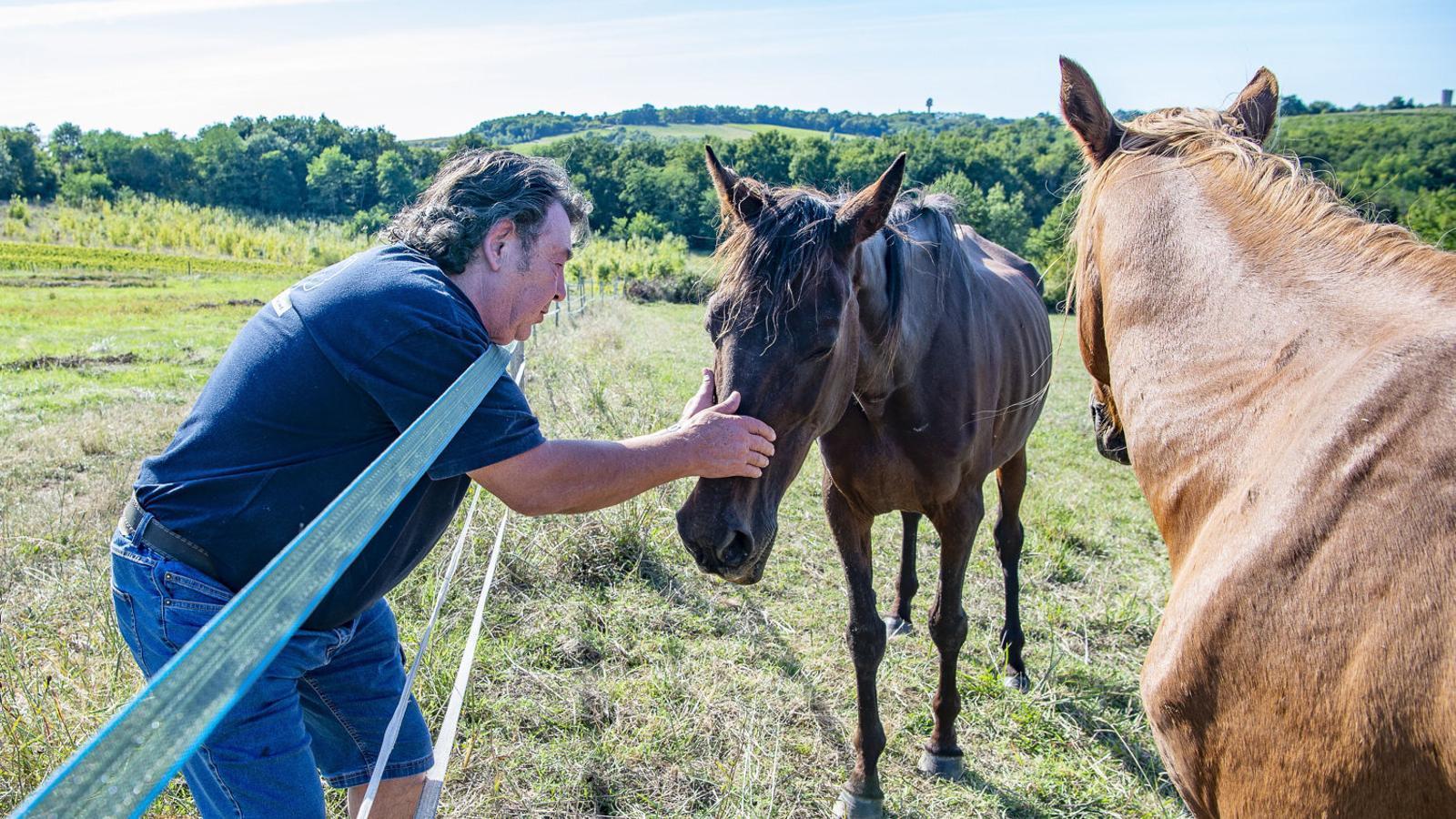 Un granger acaronant un cavall a qui uns desconeguts van intentar tallar-li la caròtida.