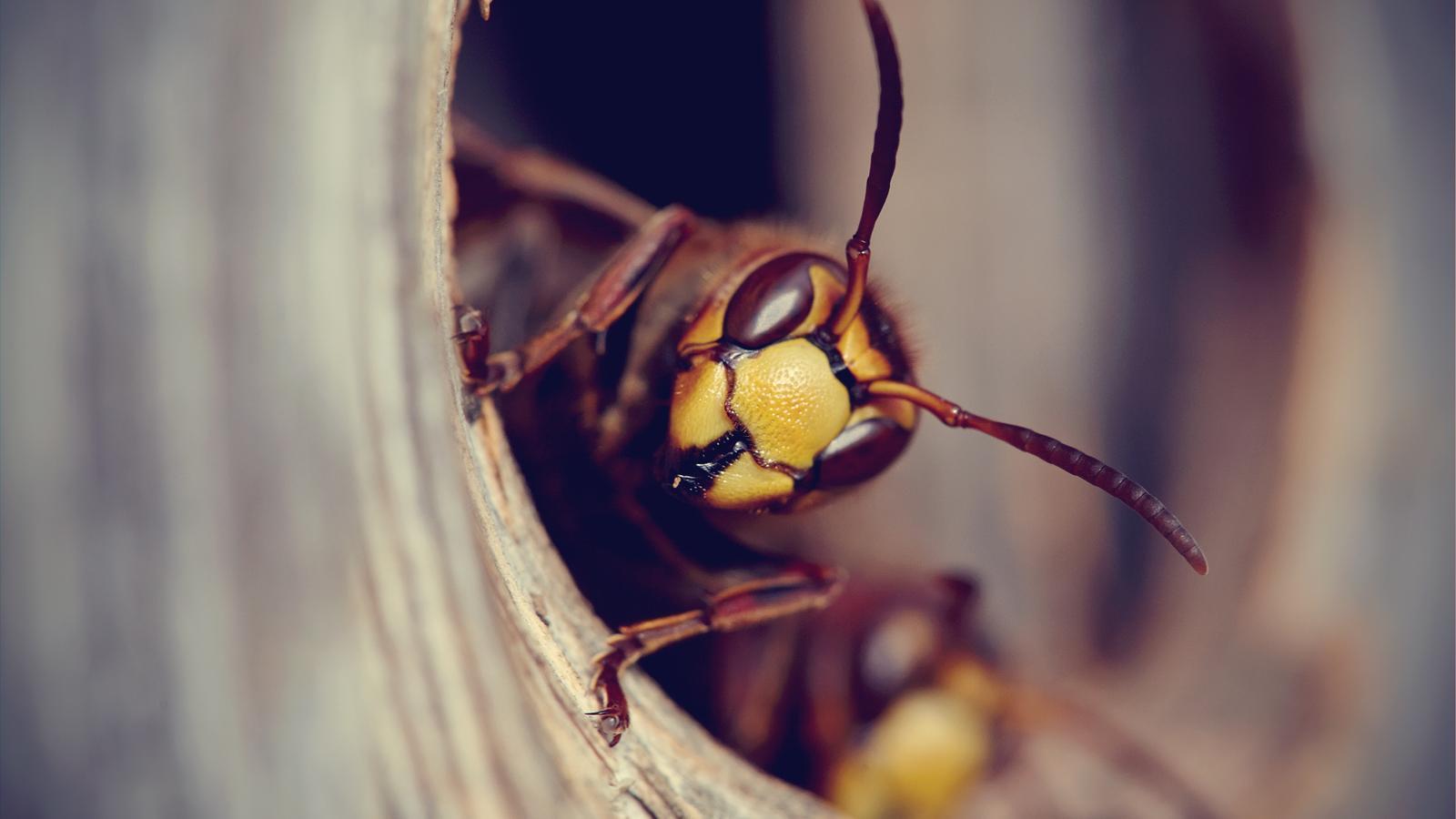 El mosquit no és el nostre únic enemic