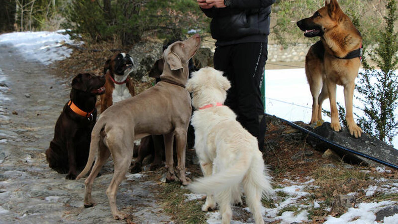 Un cuidador amb gossos. / ARXIU ANA