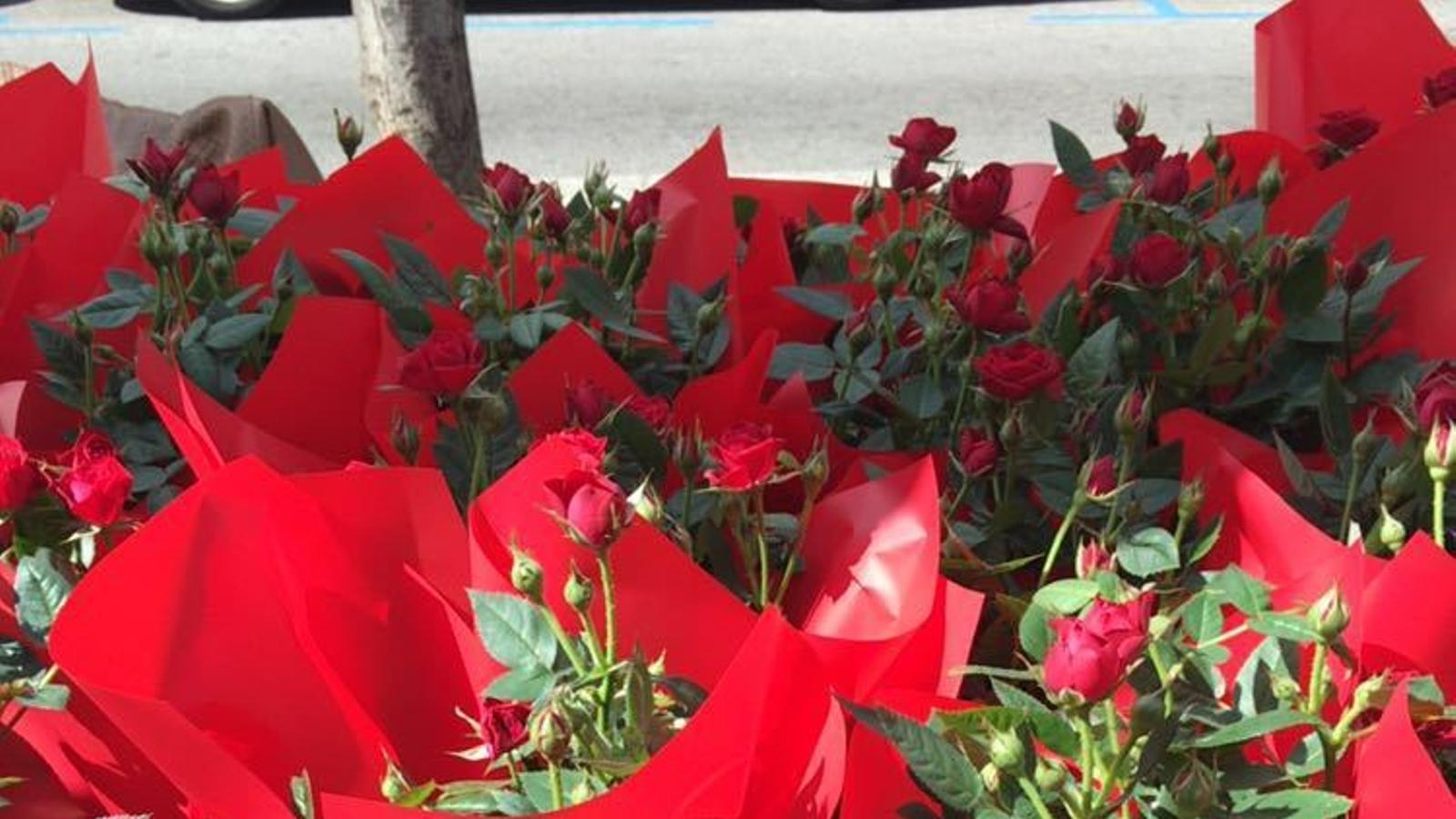 FELIZ DÍA DE SANT JORDI!!!!!!!!!!! - Página 3 Rosers-Sant-Jordi_1564053831_28607085_766x565