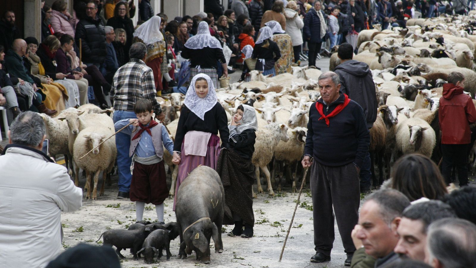 Una truja amb porcellets per davant d'una guarda d'ovelles.