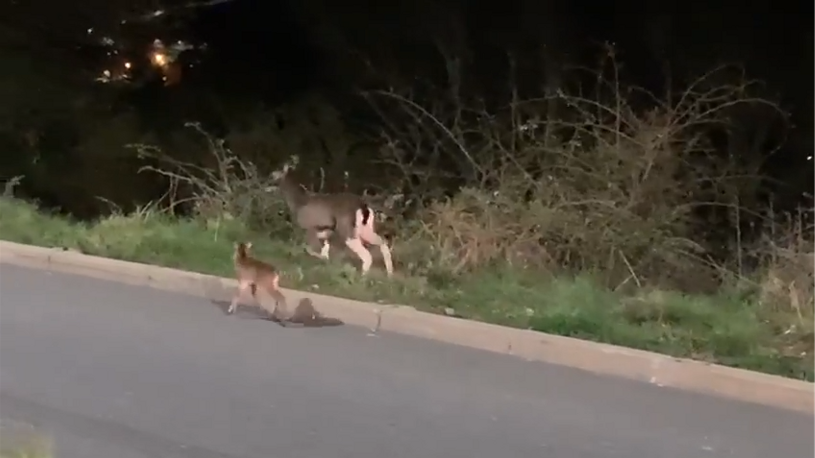 Animals salvatges baixen a les poblacions