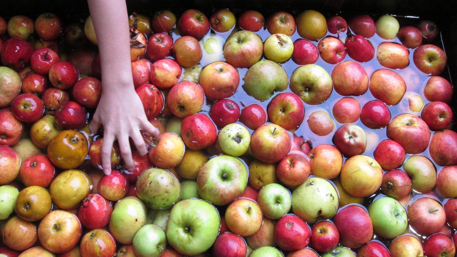 Al món hi ha documentades 7.500 varietats de pomes