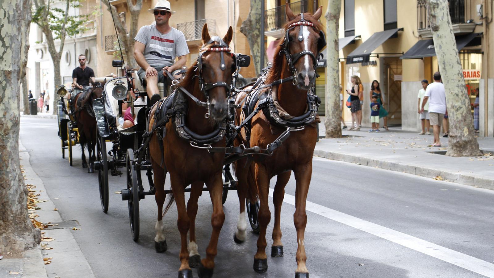 Dos conductors  De galeres fent un recorregut turístic per davant la plaça del Mercat de Palma.