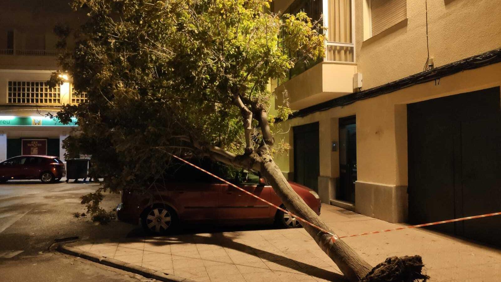 La virulència del vent ha causat desperfectes en els carrers de Maó.