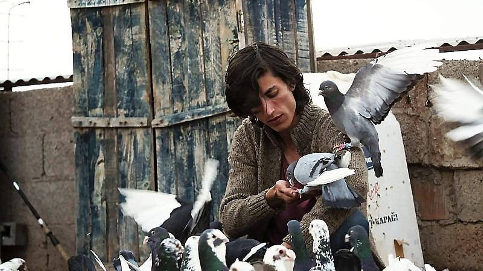 'The pigeon' arrasa en la ressuscitada Mostra de València