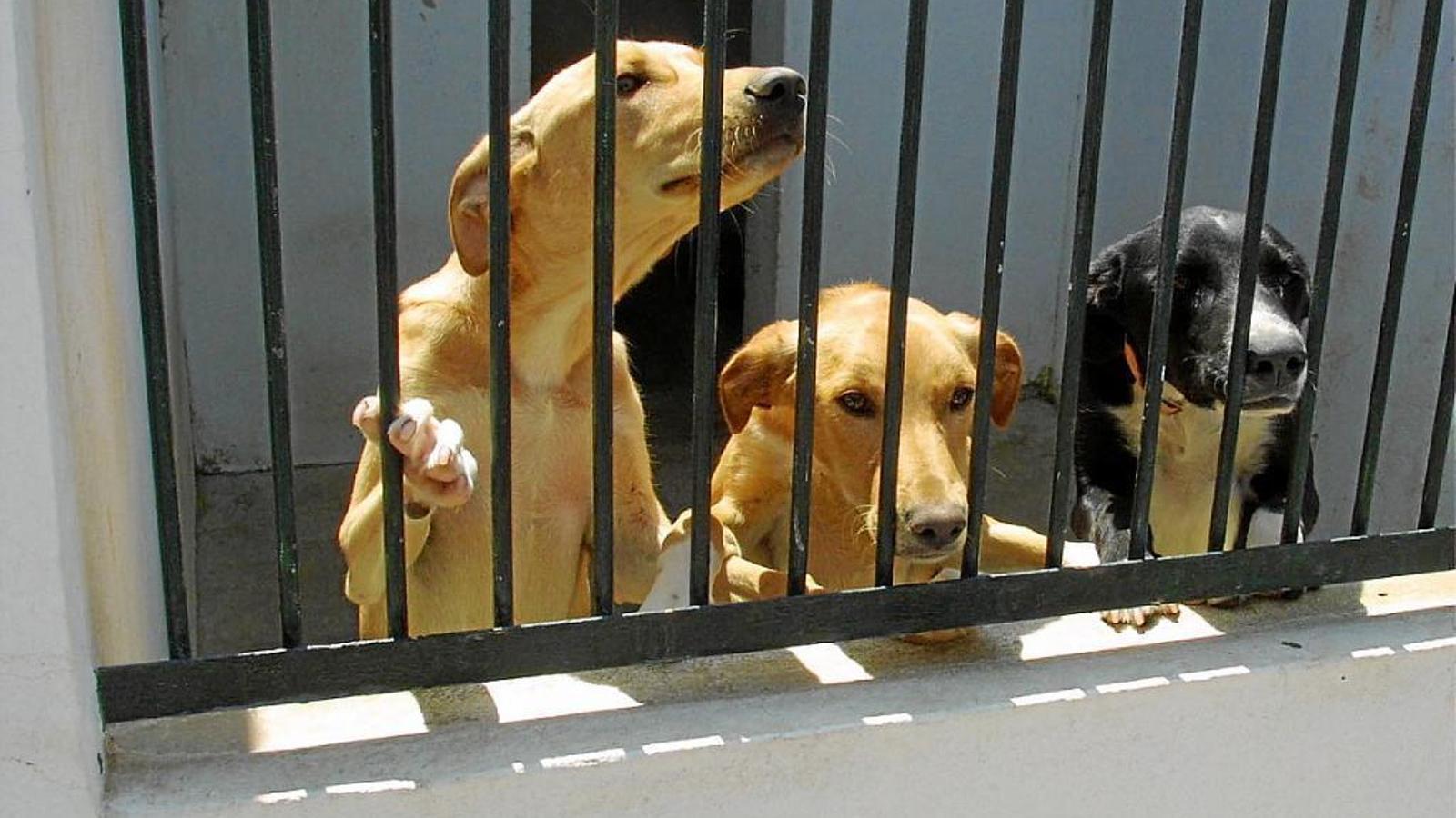 El centre demana a la ciutadania que adopti cans, moixos i altres animals.