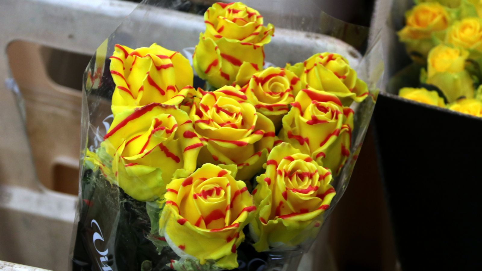 La venda de roses grogues es dispararà per Sant Jordi/ ACN