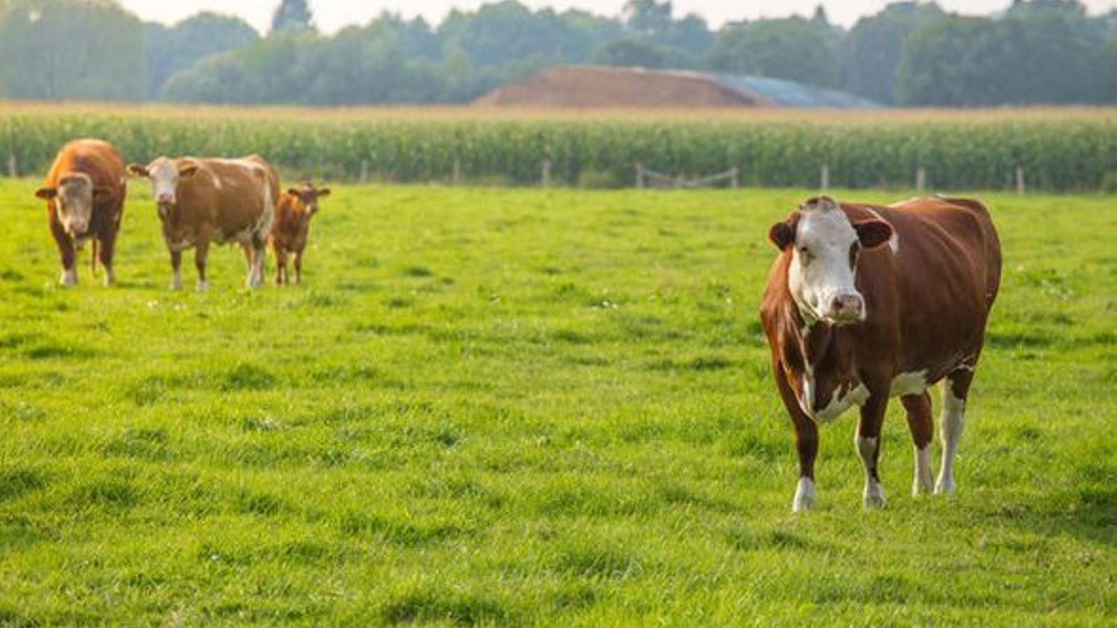 El cas s'ha produït en una granja del comtat d'Aberdeen / REUTERS