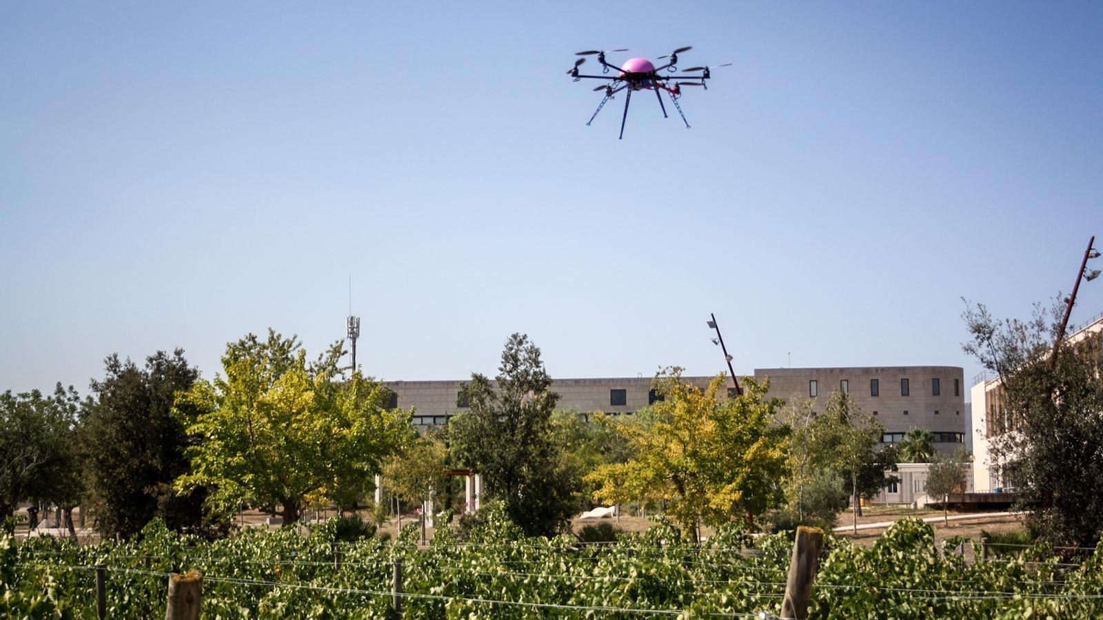 Els drons podrien ajudar els pagesos? La UIB n'avalua l'ús en el sector agrícola