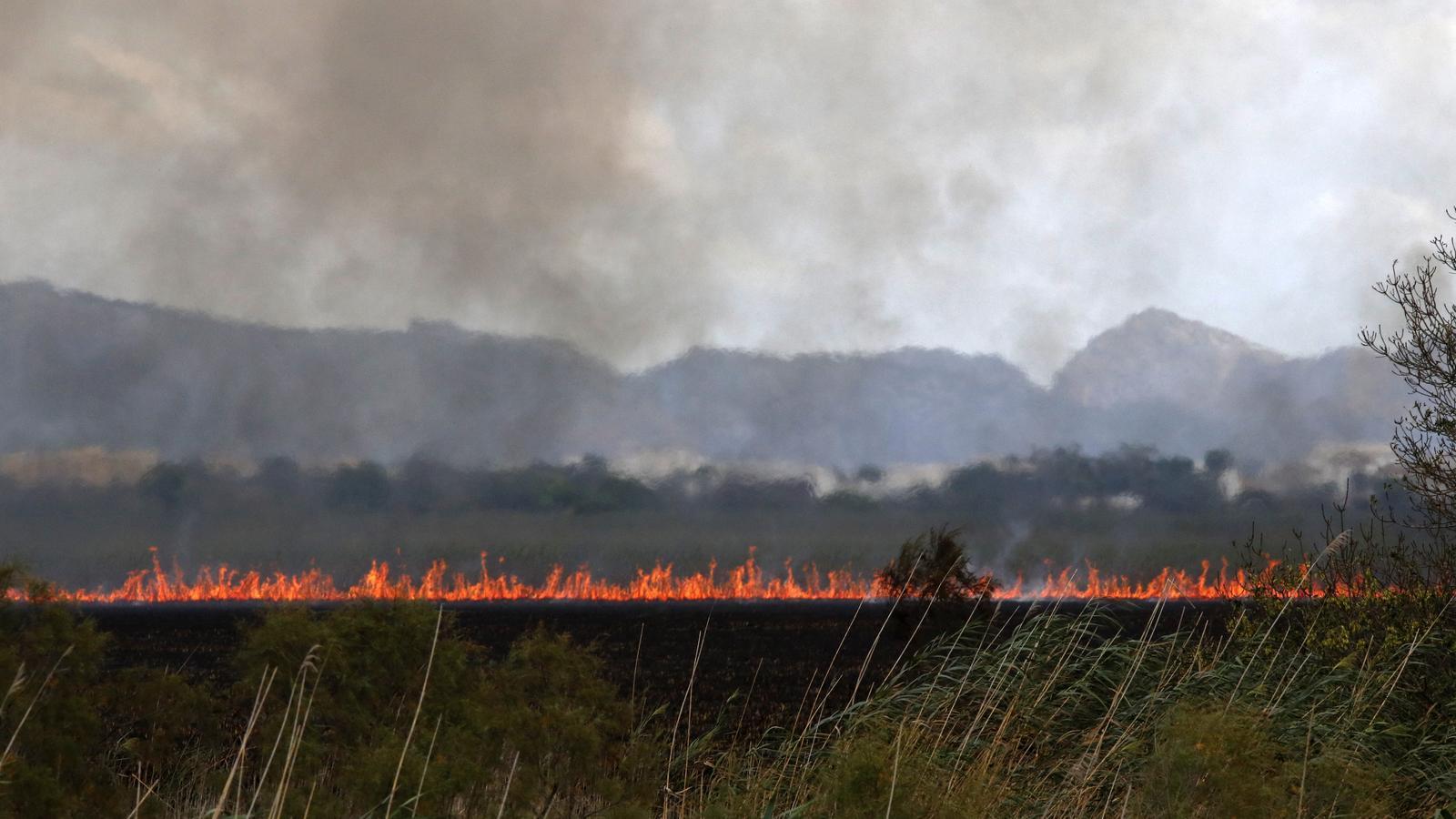 Les flames comencen a baixar a l'incendi de l'Albufera