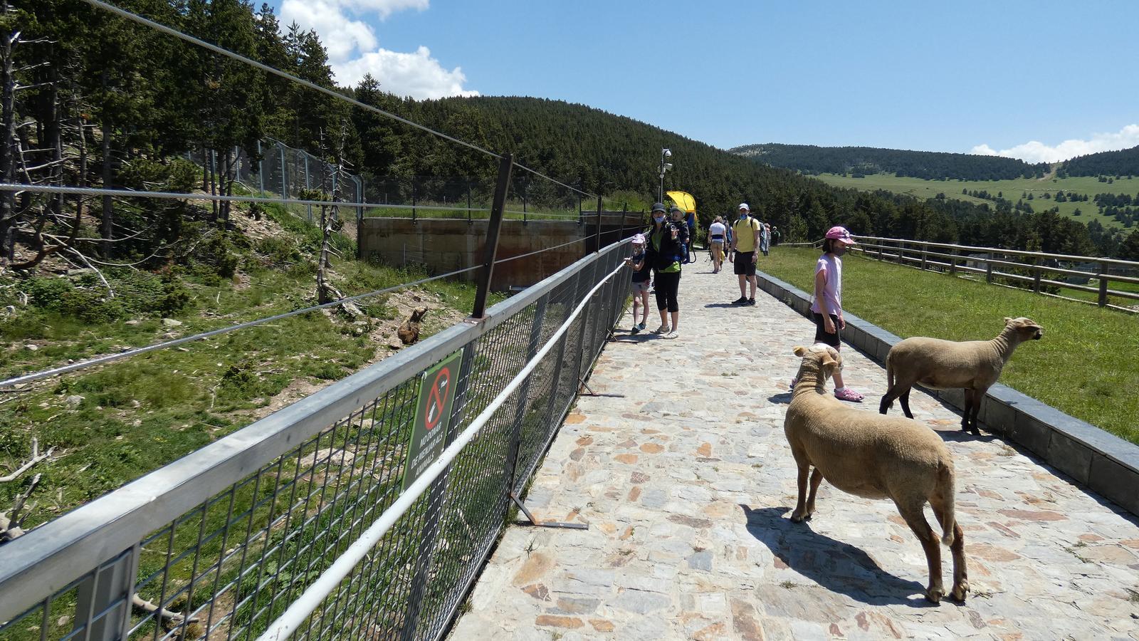 Activitats en el primer cap de setmana de reobertura de Naturlandia. / NATURLANDIA