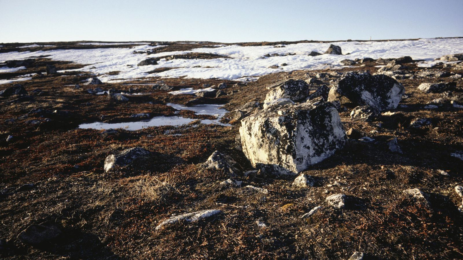 En moltes zones la tundra està cedint espai als boscos boreals