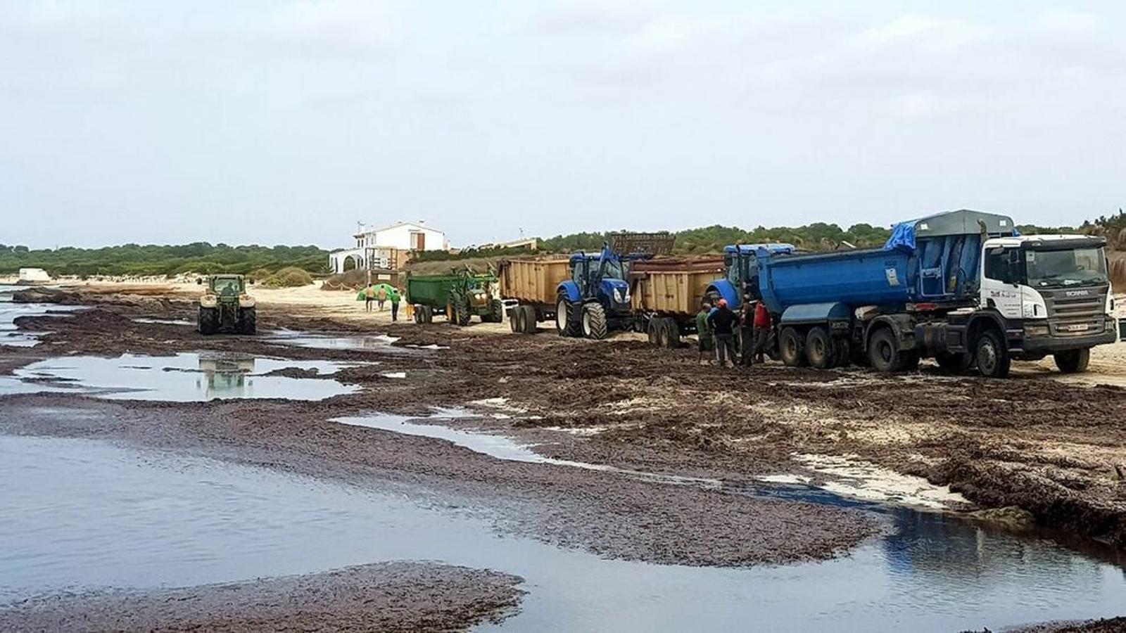 Imatge de la retirada de posidònia a la platja de la Ràpita
