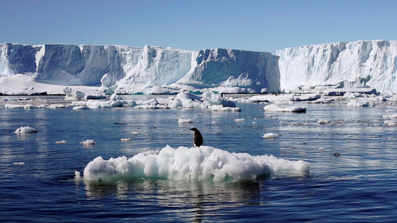 Pingüins d'Adèlia, a l'Antàrtida.