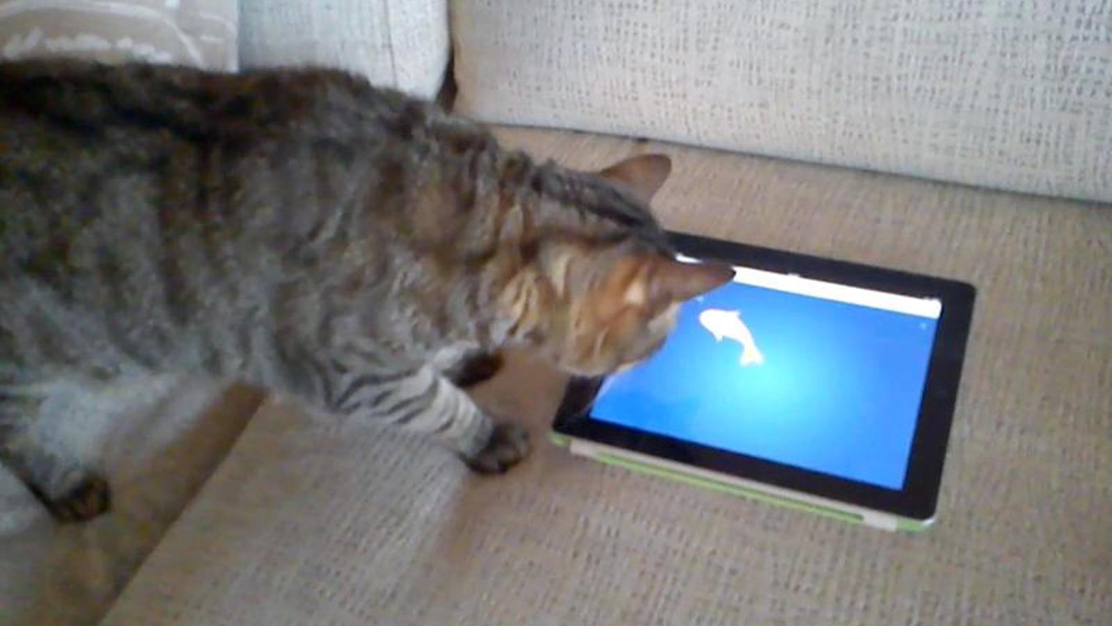Videojocs per a gats (III)