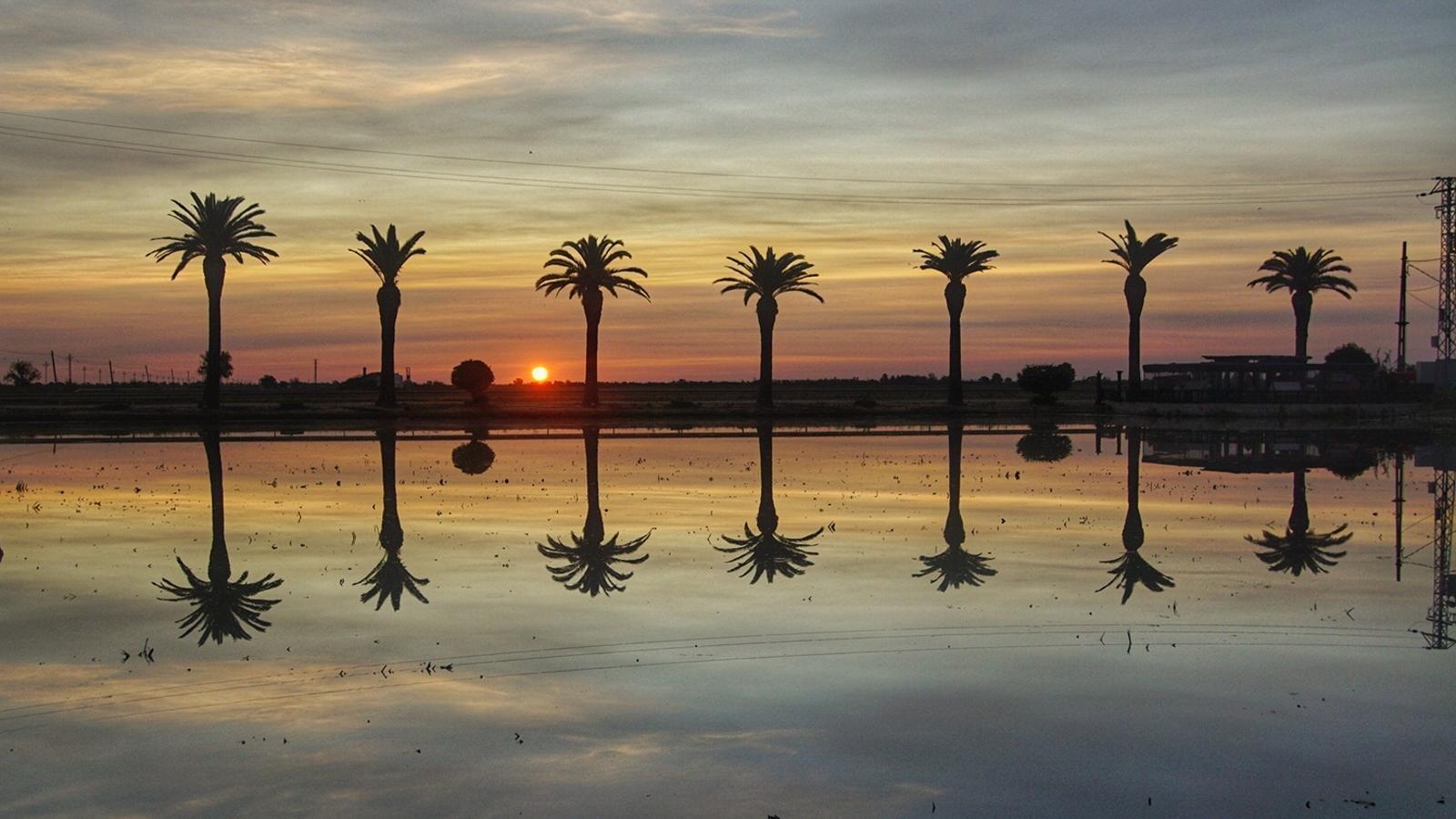 La llum de l'alba reflectida als arrossars aquest matí al Delta de l'Ebre