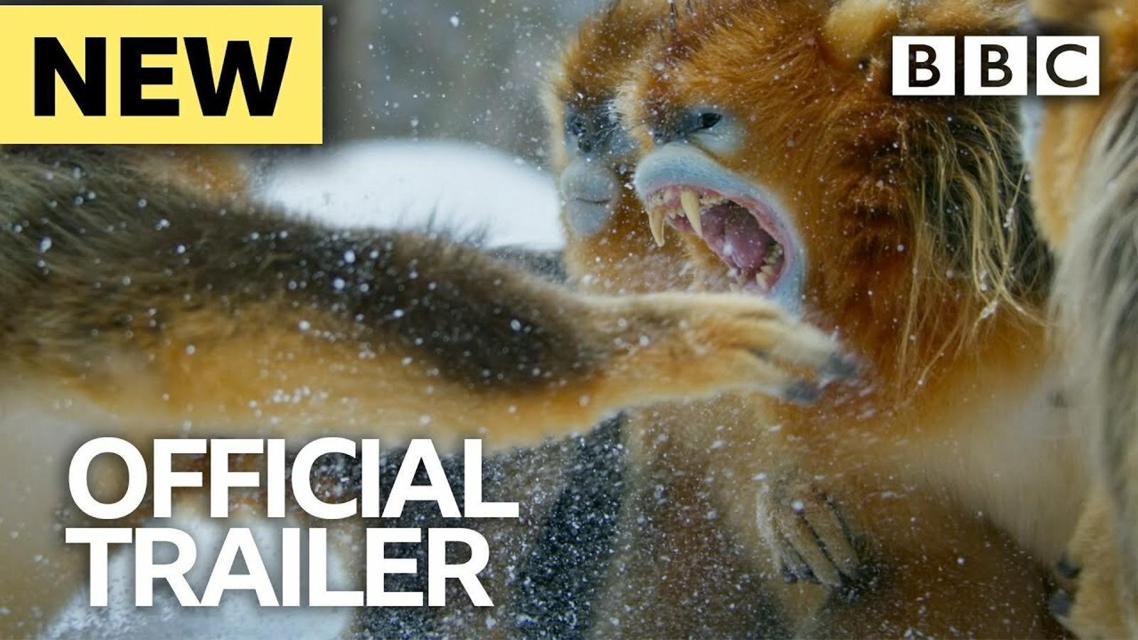 Els documentals de natura tornen a rugir
