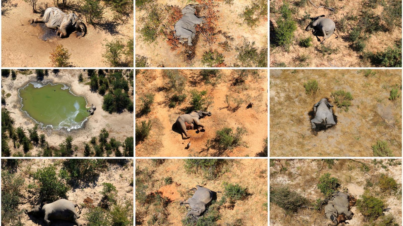 Imatges de cadàvers d'elefants detectats al delta del riu Okavango a Botswana, entre març i juny del 2020.