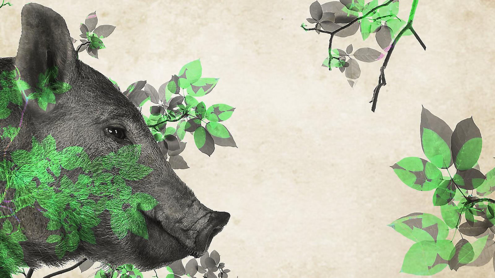 L'accident del porc 'verd'